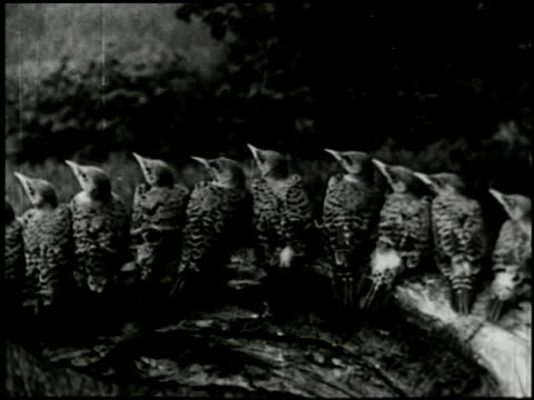 song birds as neighbors - 12 of 13 - altri spezzoni di questa ripresa 2433 video stock e b–roll