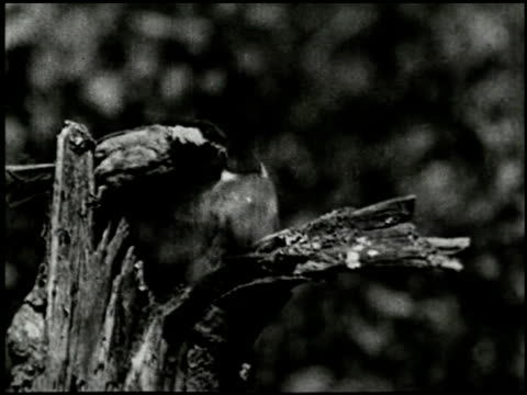 song birds as neighbors - 7 of 13 - altri spezzoni di questa ripresa 2433 video stock e b–roll