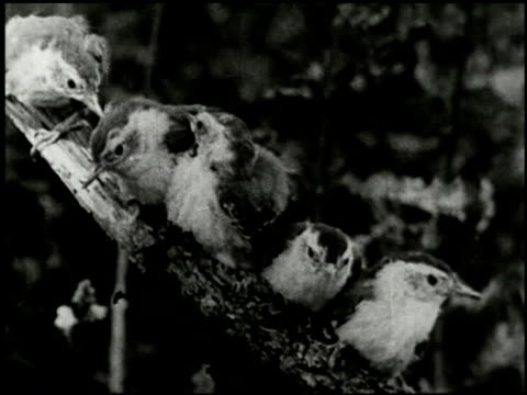 song birds as neighbors - 8 of 13 - altri spezzoni di questa ripresa 2433 video stock e b–roll