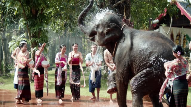 songkran, playful splashing water with elaphant - indigenous culture stock videos & royalty-free footage