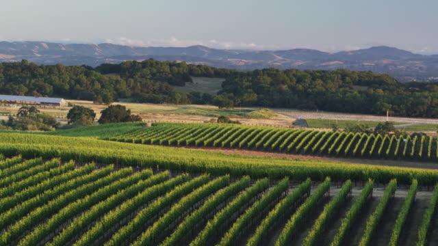 Sonoma County Landscape with Vineyards - Drone Shot