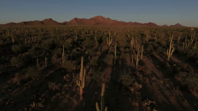 sonoran desert aerial footage - arizona cactus stock videos & royalty-free footage