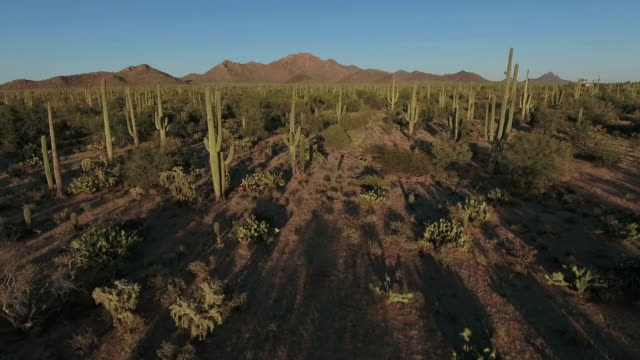 sonoran desert aerial footage - arizona stock videos & royalty-free footage