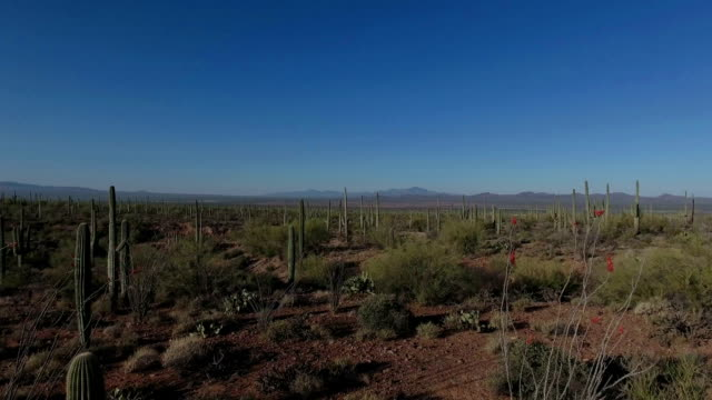 video aerea del deserto di sonora - cactus video stock e b–roll