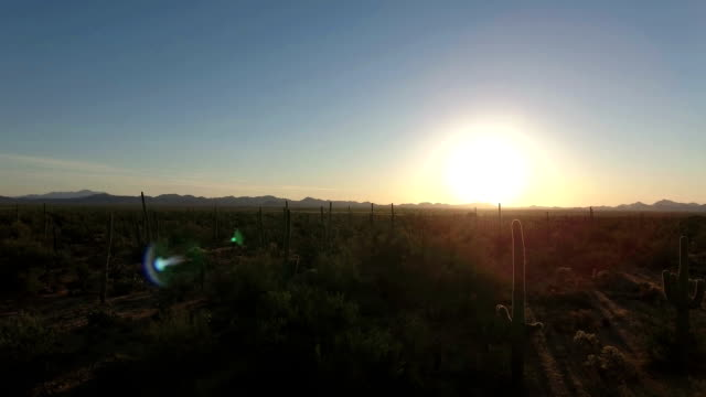 sonoran desert aerial footage - cactus sunset stock videos & royalty-free footage