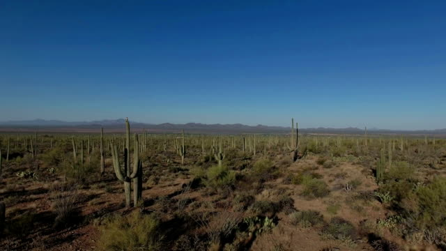 sonoran desert aerial footage - old man cactus stock videos and b-roll footage