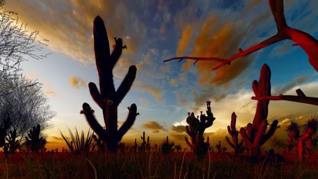 sonoran desert  animation - saguaro cactus stock videos & royalty-free footage