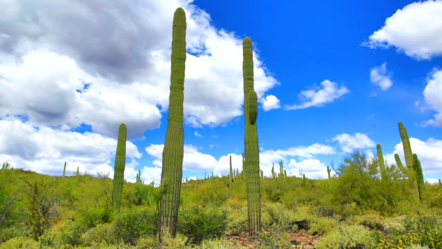 sonoran desert time lapse - arizona cactus stock videos & royalty-free footage