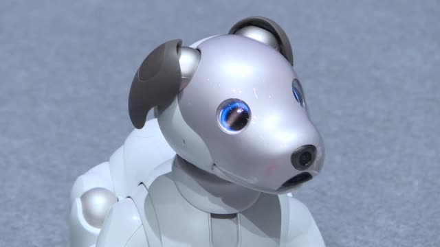Sony's new aibo dog is an ivory white puppy sized 30 centimetre hound with flapping black ears and a wagging tail
