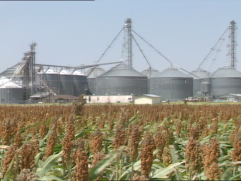 vídeos de stock e filmes b-roll de sorghum plants moving in wind tops heavy w/ seeds tu xws large grain storage system in bg repeats agriculture americana farm feed food fodder... - sorgo família da relva