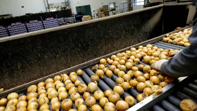 sorting and packing the onion on the production line in the vegetable wholesale - packaging stock videos & royalty-free footage