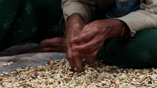 Sorting coffee beans hands close up