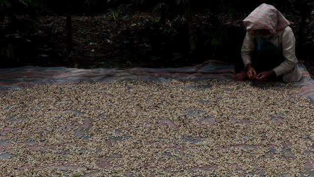 Sorting coffee beans in Sumatra