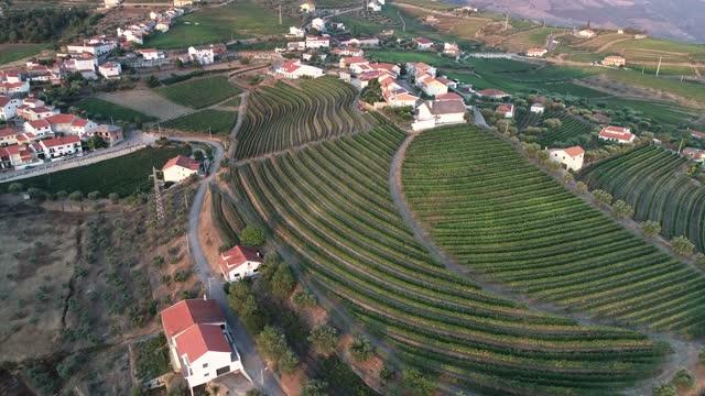 vídeos y material grabado en eventos de stock de soutelo do douro vineyards in portugal from aerial view - valle