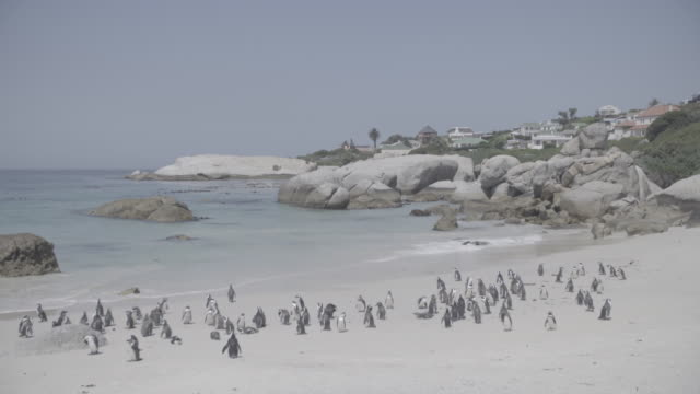south africa - boulder beach western cape province stock videos and b-roll footage
