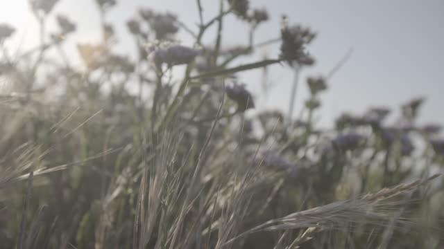 south africa - ライオンズヘッド点の映像素材/bロール