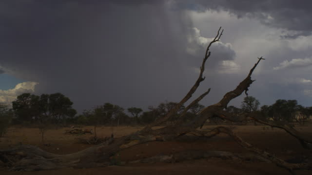 t/l ws south african desert and trees with rain clouds sweeping over - south africa stock videos & royalty-free footage