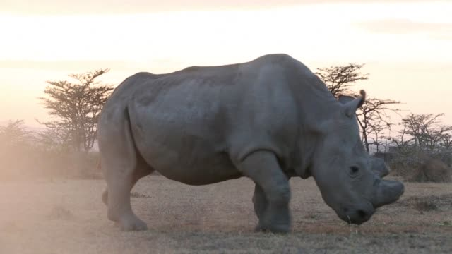 South African police are investigating alleged links between the country's security minister and a Chinese rhino horn smuggler