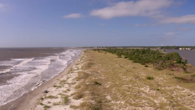 south carolina island - sea grass plant stock videos & royalty-free footage