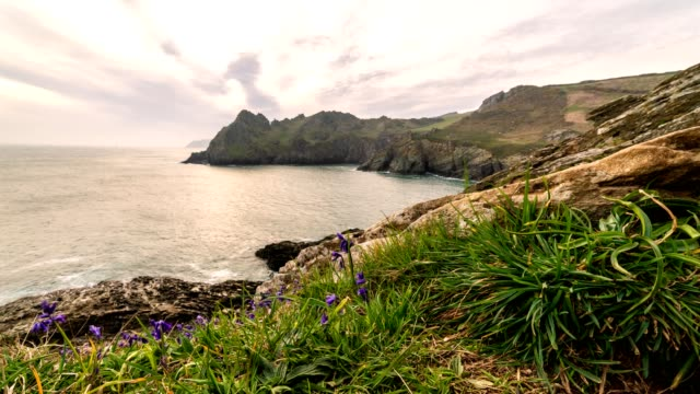 south devon coast bluebells - cornwall england stock videos & royalty-free footage