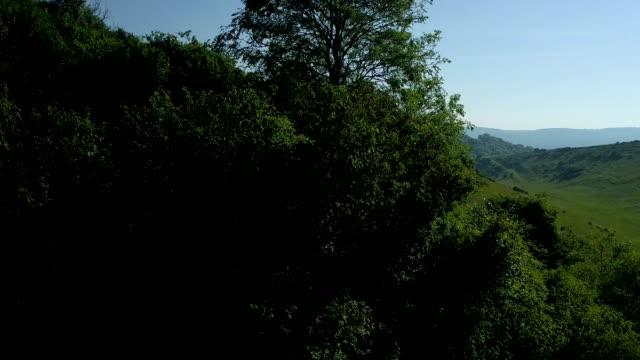 south downs, woodland - サウスダウンズ点の映像素材/bロール