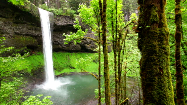stockvideo's en b-roll-footage met south falls in the silver falls state park, oregon, usa - beschermd natuurgebied