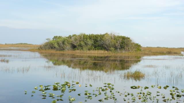 South Florida Swamp at Everglades National Park