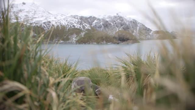south georgia island, 2015 - antarctic ocean stock videos & royalty-free footage