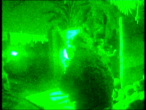 south of baghdad camp dogwood black watch troops raiding homes of former saddam loyalists now being used by insurgent fighters bv one soldier... - prisoner stock videos & royalty-free footage