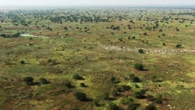 south sudan :  cattle herd - horn of africa stock videos and b-roll footage