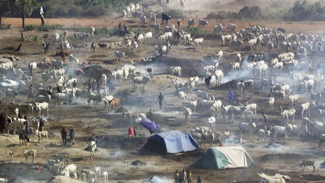 south sudan : people among herd catlle - スーダン点の映像素材/bロール