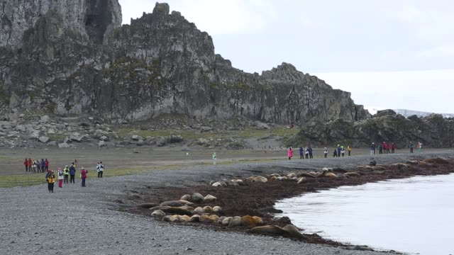 southern elephant seal, seal, mirounga leonina and tourists at elephant point, livingston island, south shetland islands, antarctica. - southern elephant seal stock videos & royalty-free footage