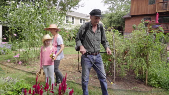 southern european grandfather spraying his garden - southern european stock videos & royalty-free footage