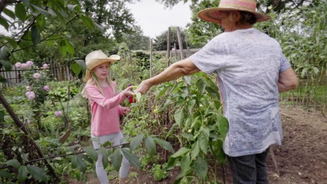 vídeos y material grabado en eventos de stock de sur europeo abuelo rociado su jardín - huerto