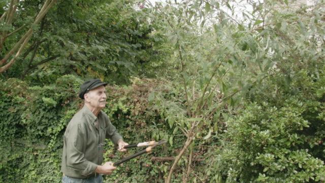 southern european senior man pruning a tree in his garden - southern european stock videos & royalty-free footage