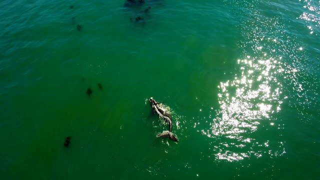 Südlicher Glattwal der Western Cape coast