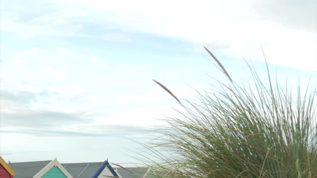 southwold,row of beach huts,dune in foreground,zo,pan - marram grass stock videos and b-roll footage