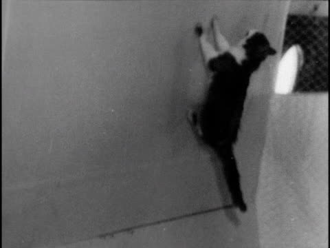 vídeos de stock, filmes e b-roll de soviet experiments with weightlessness pigeon trying to fly cat floating in zero gravity on plane - zero gravity