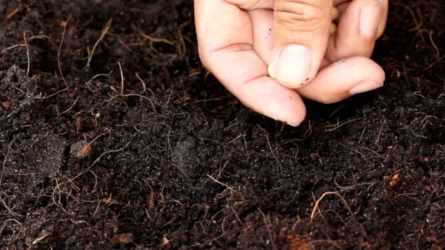 sowing seed - sowing stock videos & royalty-free footage