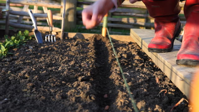 sowing seeds at the allotment - vegetable garden stock videos & royalty-free footage