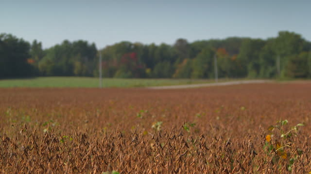 soybean field - ontario canada stock videos and b-roll footage
