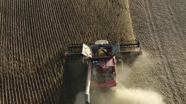 soybean harvest tiskilwa illinois us on thursday 27 september 2018 - soybean stock videos and b-roll footage