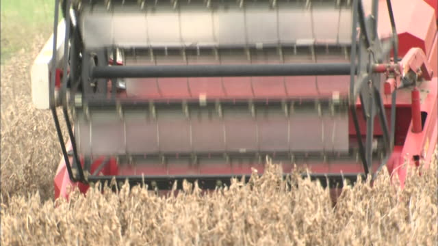 soybean harvest - 大豆点の映像素材/bロール