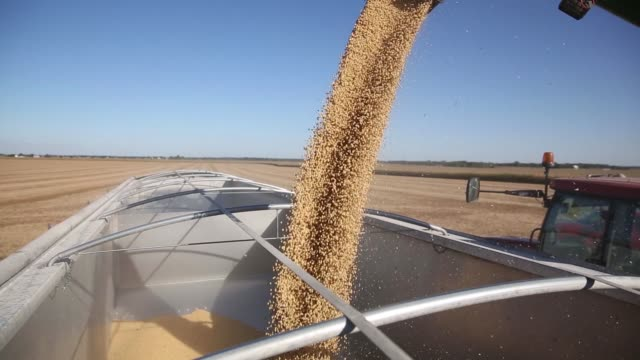 soybeans are poured into truck after being harvested with a case ih combine harvester in princeton illinois us on friday sept 29 2017 videographer... - soybean stock videos and b-roll footage