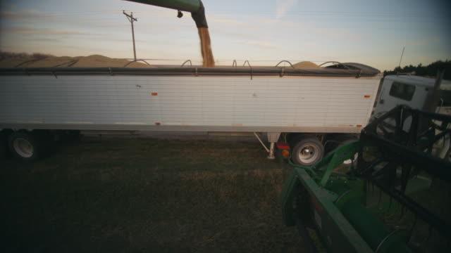 soybeans are transferred into a semi trailer for transport to market. - soybean bildbanksvideor och videomaterial från bakom kulisserna
