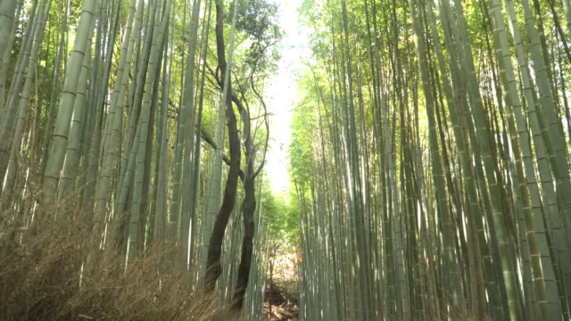 space between treetop of arashiyama bamboo forest in kyoto, japan - kyoto stock videos and b-roll footage