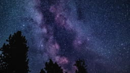 Space Motion Time Lapse of Milky Way Galaxy Stars Over Silhouette Tree Show