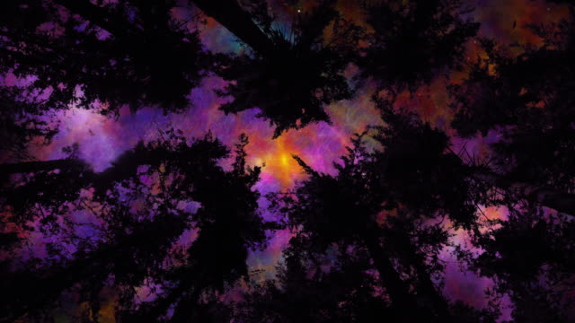 space night sky above the forest treetops - ethereal stock videos & royalty-free footage