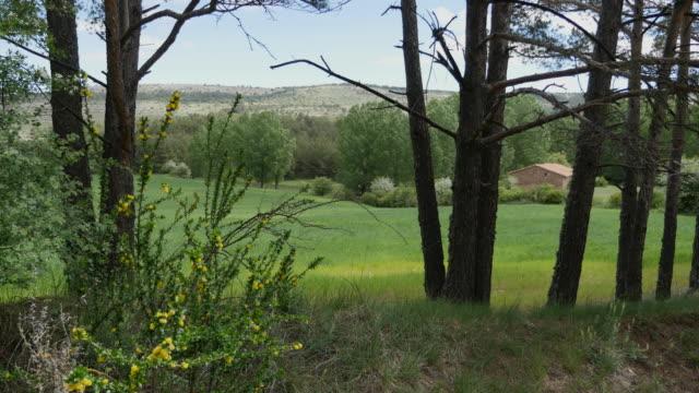 Spain Sierra de Gudar wheat field between trees