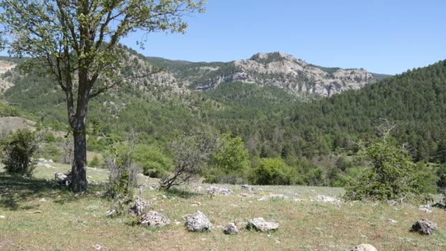 Spain Sierras in Castile Leon with tree